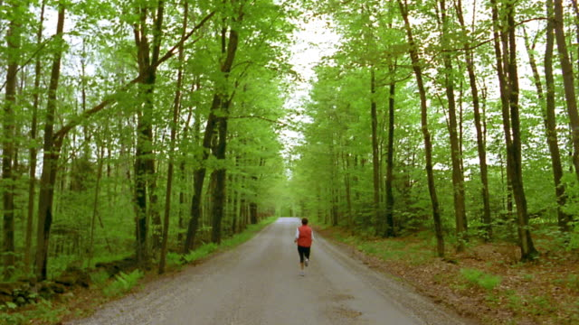 long shot jogger running on road lined w/tall green trees away from cam / vermont - elastane video stock e b–roll