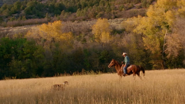 long shot man in cowboy hat riding horse through field in autumn / border collie accompanying / co - ranch stock videos & royalty-free footage