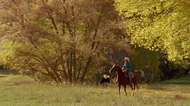 long shot man riding horse under tree during autumn / zoom out field / border collie in background / colorado - 僅一成熟男士 個影片檔及 b 捲影像