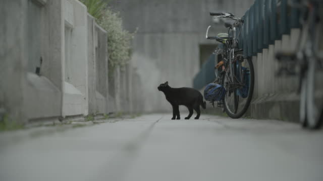 long shot of a black cat jumping up onto a garden wall. - housing development stock videos & royalty-free footage