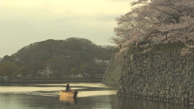 Long shot of a boat sailing along Himeji Castle on the moat cherry blossoms in full bloom on the top of stone walls along the moat