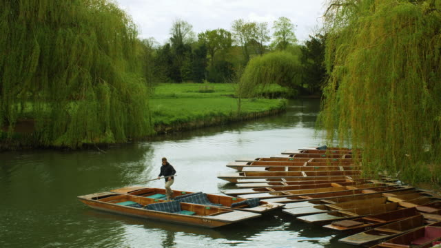 long shot of a man checking moored punts on the river cam, cambridge. - cambridge england stock videos and b-roll footage