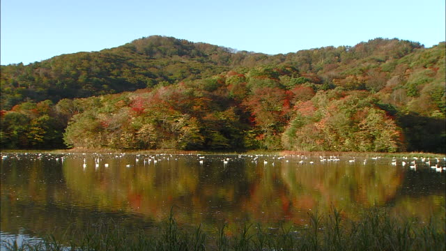 Long shot of autumn leaves on Mt. Takadate