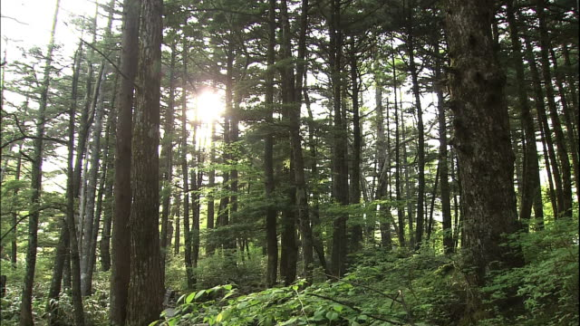 long shot of forests. - nagano prefecture stock videos and b-roll footage