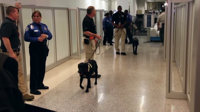 long shot of k9 unit checking passengers. the program already in place at three other airports in the nation uses behavior detection officers working... - セキュリティスキャナ点の映像素材/bロール