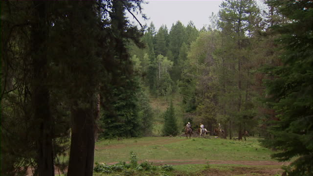 long shot of people on horseback moving through a forest. - idaho stock videos & royalty-free footage