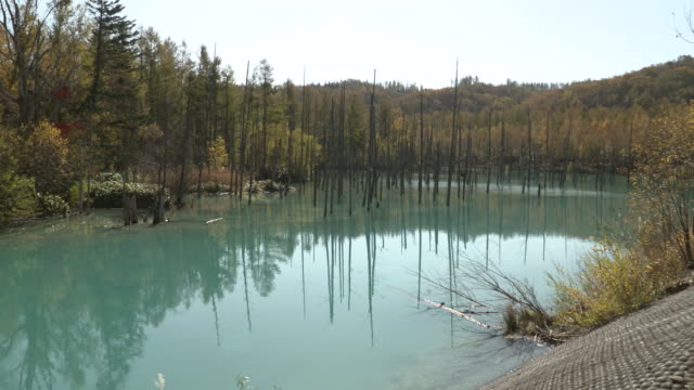 long shot of the biei river and autumn leaves at the shirogane blue pond - biei town stock videos & royalty-free footage
