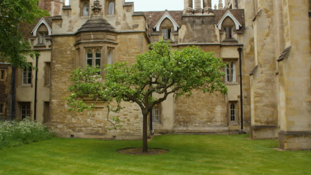 long shot of the isaac newton apple tree at trinity college, cambridge. - trinity college cambridge university stock videos & royalty-free footage