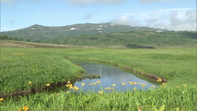 Long shot of the Uryu-numa Wetlands; Ponds and clumps of Amur daylilies