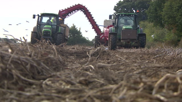 Long shot of two tractors harvesting potatoes
