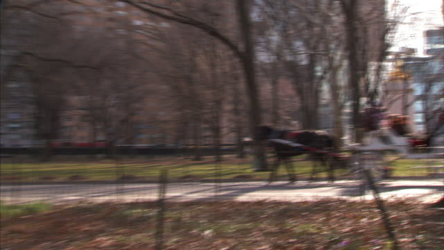 long shot pan-left pan-right zoom-in zoom-out - tourists ride in a horse-drawn carriage in central park. / new york city, new york, usa - arbeitstier stock-videos und b-roll-filmmaterial