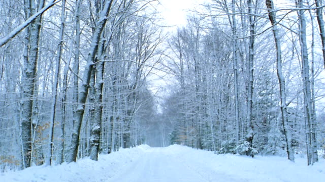 long shot road lined w/trees changing through four seasons / vermont - vermont stock videos & royalty-free footage