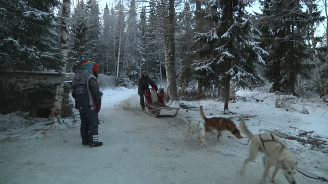 long shot santa claus in his land of rovaniemi departing with his sledge drawn by his dogs shot on november 2010 - hooved animal stock videos & royalty-free footage