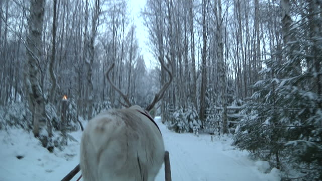 Long shot Santa Claus in his land of Rovaniemi riding his sledge drawn by his reindeer Shot on November 2010