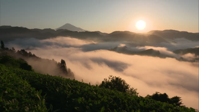 long shot: sea of clouds illuminated by the morning sun, shizuoka, japan - satoyama scenery stock videos & royalty-free footage
