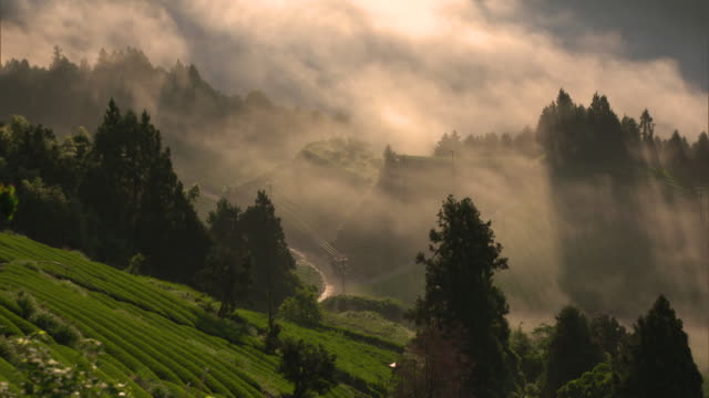 long shot: sea of clouds over the tea fields in a steep valley of the ryogo-uchi area, shizuoka, japan - 自然の景観点の映像素材/bロール