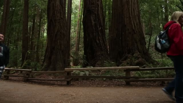 long shot sequoia forest finally some good news about the effects of climate change it may have triggered a growth spurt in two of california's... - giant sequoia stock videos and b-roll footage