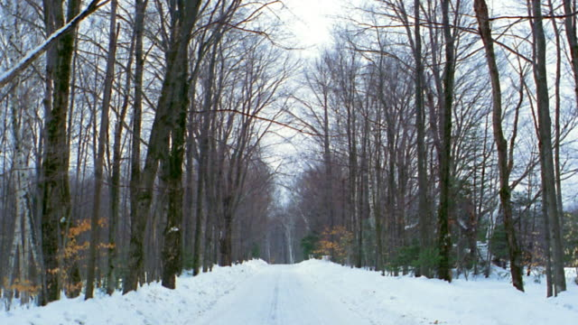 long shot snowy road lined w/bare trees / vermont - bare tree stock-videos und b-roll-filmmaterial
