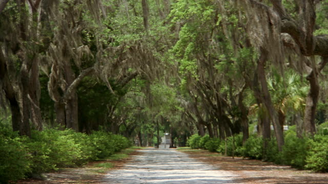 long shot spanish moss hanging from oak trees lining country road / savannah, georgia - georgia stati uniti meridionali video stock e b–roll