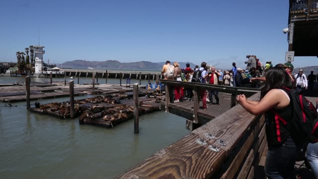 stockvideo's en b-roll-footage met long shot spectators watching sea lions on a dock at pier 39 sea lions at san francisco's pier 39 on may 31 2013 in san francisco california - pier 39