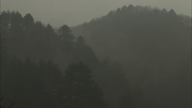 long shot static _ mist rises from a forest during a rainstorm / ya'an, china - mountain range stock videos & royalty-free footage