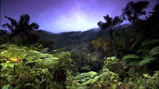 Long Shot steadicam tracking,right , A vivid blue sky glows above the El Yunque National Forest in Puerto Rico. / El Yunque National Forest, Puerto Rico