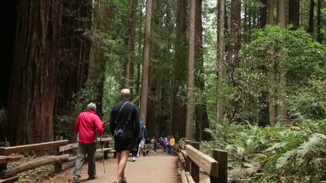 long shot, tourists strolling in the muir woods. finally, some good news about the effects of climate change. it may have triggered a growth spurt in... - 国有林点の映像素材/bロール