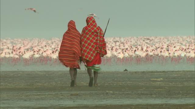 long shot - two maasai walk towards a huge flock of flamingos in africa / kenya - masai stock videos and b-roll footage