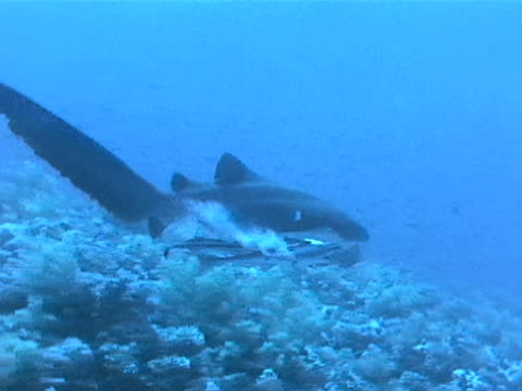 long shot - remora fish stock videos & royalty-free footage