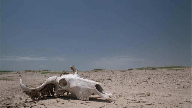 long shot - animal skull stock videos and b-roll footage