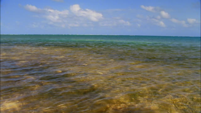 Long shot view across clear green waters of Caribbean Sea / Ambergris Caye, Belize