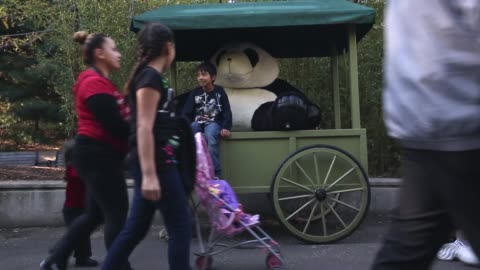 long shot, visitors take pictures with a stuffed giant panda at the smithsonian's national zoological park. washington, dc. october 18, 2013.... - smithsonian institution stock videos & royalty-free footage