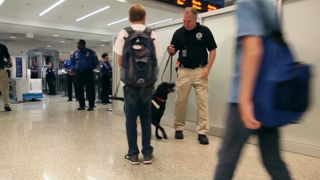 long tracking shot of k9 unit checking passengers luggage as they go through security checks. the program already in place at three other airports in... - セキュリティスキャナ点の映像素材/bロール