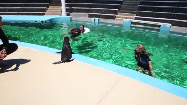 Long tracking shot sea lion pups behaving badly Marine mammal trainers Samantha Sanford and Megan Korner train two eightweek old sea lion pups named...