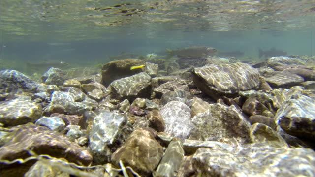 Long Underwater Fishing Glacier Fresh water Snowmass Aspen Maroon Bells Wilderness Fishing