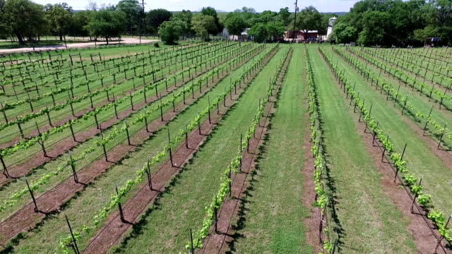 Long Version flying backwards and high angle at the end Aerial Wine to Market or Farm to Market in Austin Texas