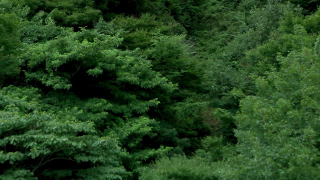 long zoom out of dense forest in shodo island - satoyama scenery stock videos & royalty-free footage