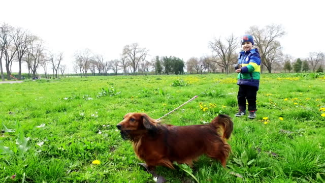 Long-haired Dachshund in the park.
