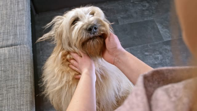 slo mo long-haired dog jumping up to the owner giving his a signal to jump - long hair stock videos & royalty-free footage