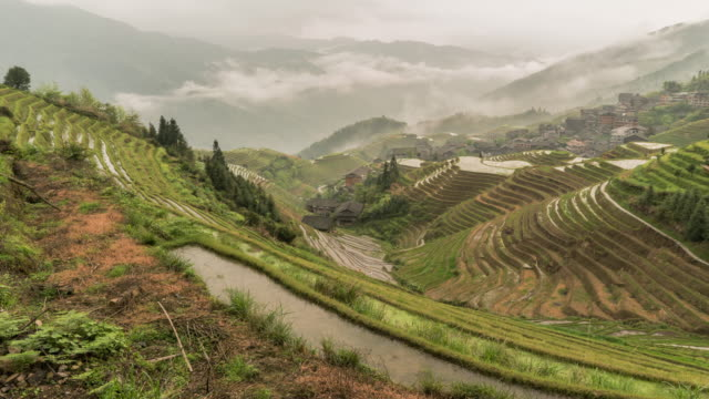 longji dragons back rice terraces timelapse - rice terrace stock videos and b-roll footage