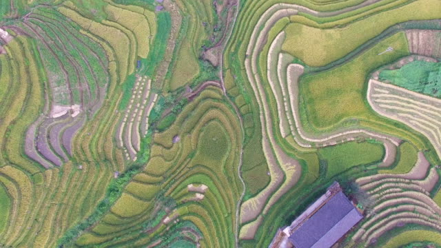 longji terraced fields in longsheng,guilin,china - rice paddy stock videos and b-roll footage
