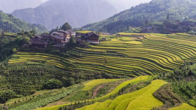 longji terraced fields in longsheng,guilin,china - rice paddy stock videos & royalty-free footage