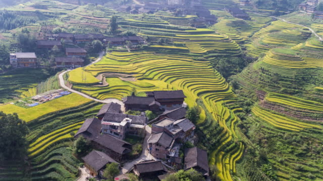 longji terrassenfeldern bei longsheng, guilin, china - rice paddy stock-videos und b-roll-filmmaterial