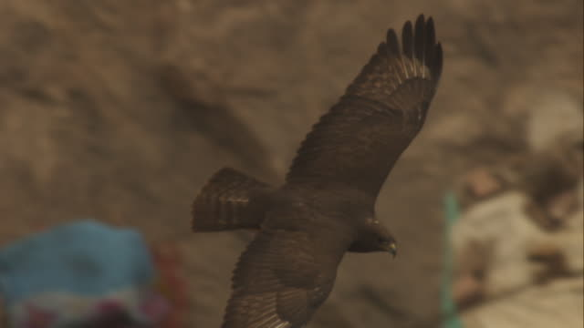 ha ms longlegged buzzard gliding over waste ground in jodhpur - habicht stock-videos und b-roll-filmmaterial