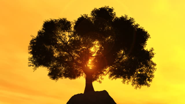 lonly tree on a cliff at sunset - single tree stock videos & royalty-free footage