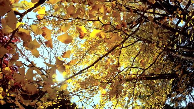 look around colored leaves -4k- - plusphoto stock videos & royalty-free footage