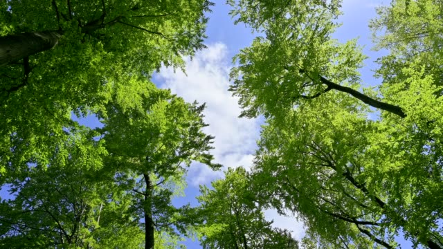 look in the treetops in spring, spessart, bavaria, germany - treetop stock videos & royalty-free footage