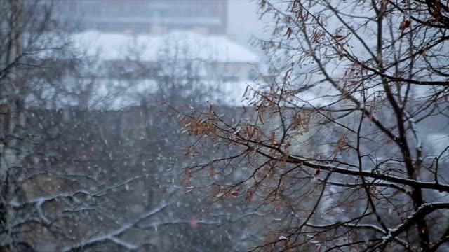 窓の外に見える! 雪が降っています。 - ウィンターコート点の映像素材/bロール