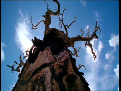 stockvideo's en b-roll-footage met look up gnarled and bare tree to clouds passing in sunny blue sky - bare tree