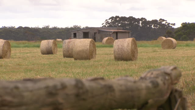 looking along a rustic log towards harvested rolled up hay bales in a paddock old farm shed in the background - hay background stock videos & royalty-free footage
